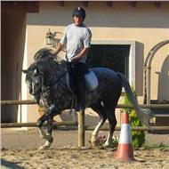 Profesor, instructor de equitacion