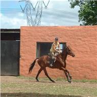 Profesora de equitación